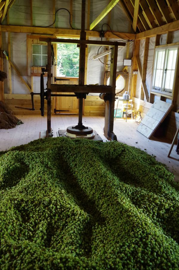 Charcoal Drying Cascade Hops Beer history, English
