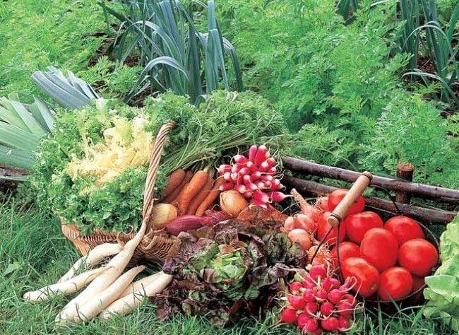 que semer et planter en t apr s les r coltes permaculture gardens and houseplants. Black Bedroom Furniture Sets. Home Design Ideas