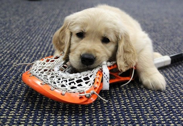 These 8 Puppies Posing With Denver Outlaws Lacrosse Players Will
