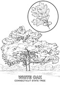 47+ New york state tree coloring page HD