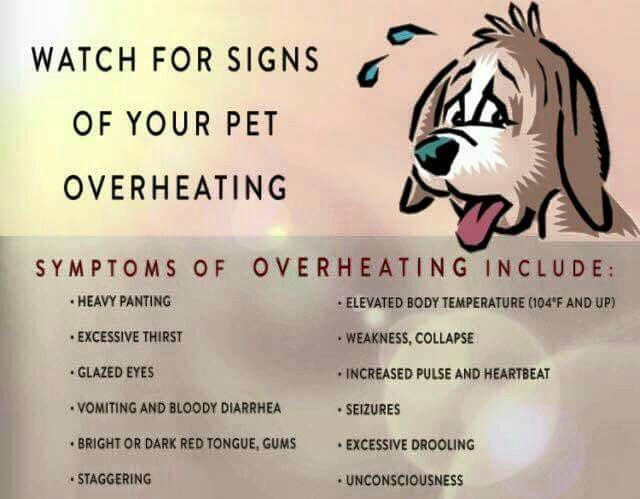 Keep pets safe this summer.