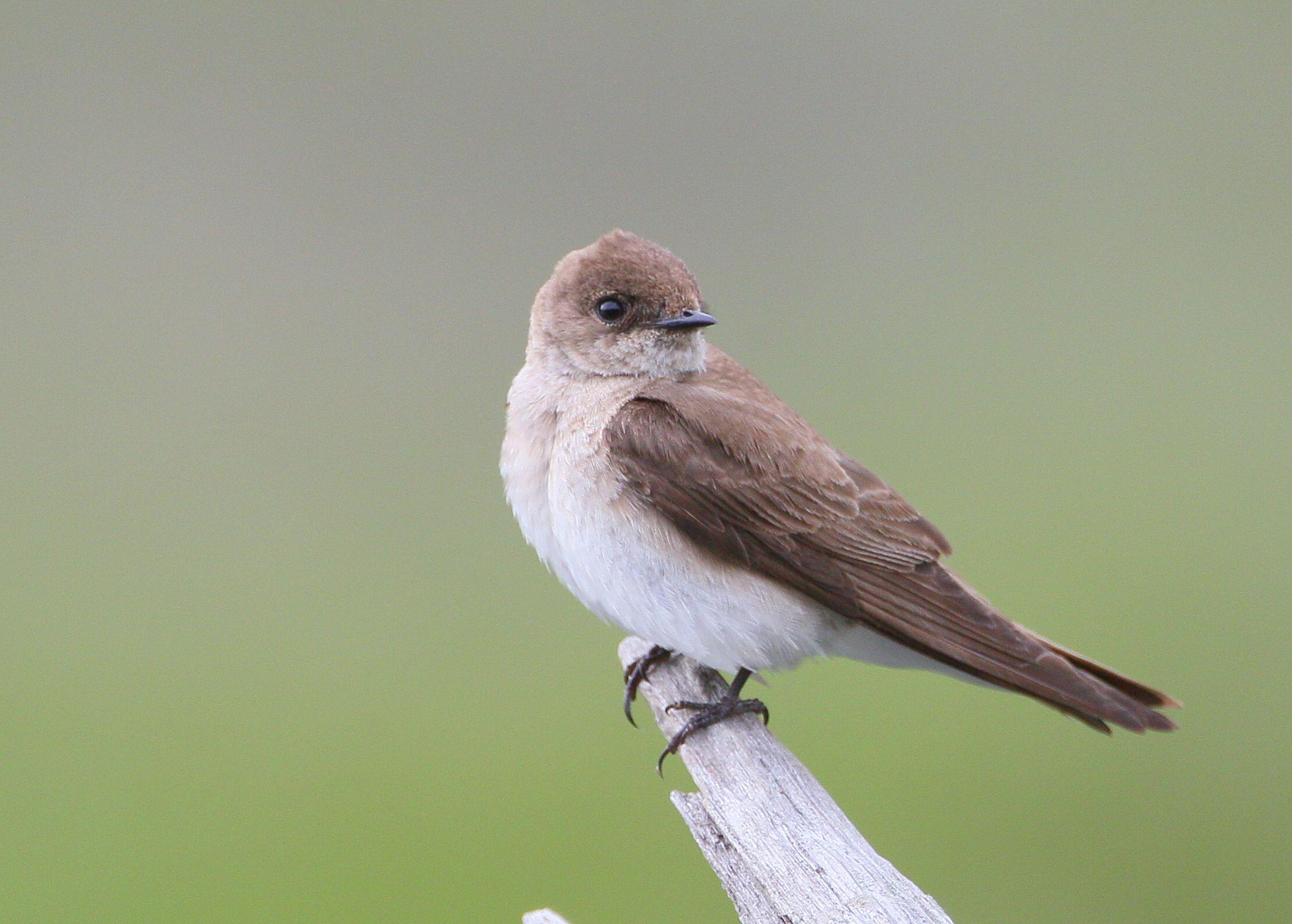 362 best oregon birds images on pinterest oregon backyard birds