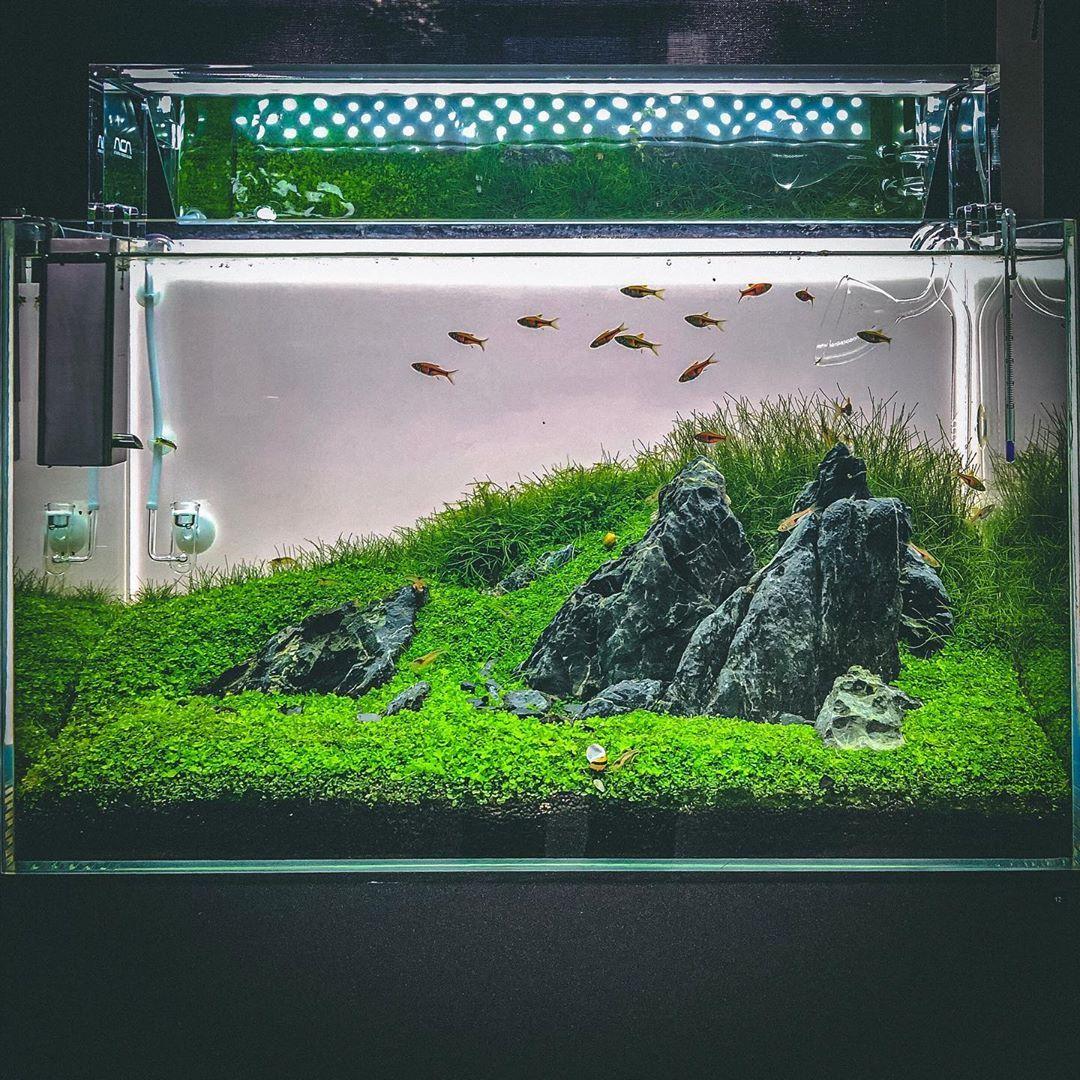 This Iwagumi Scape Look So Nice Nature Aquarium Aquarium Design Fish Tank