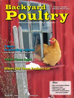 Best Backyard Chickens: Facts About Chickens, Best Chickens For Eggs,  Raising Meat Chicken Breeds, What To Feed Chickens U0026 Easy Chicken Coops To  Build