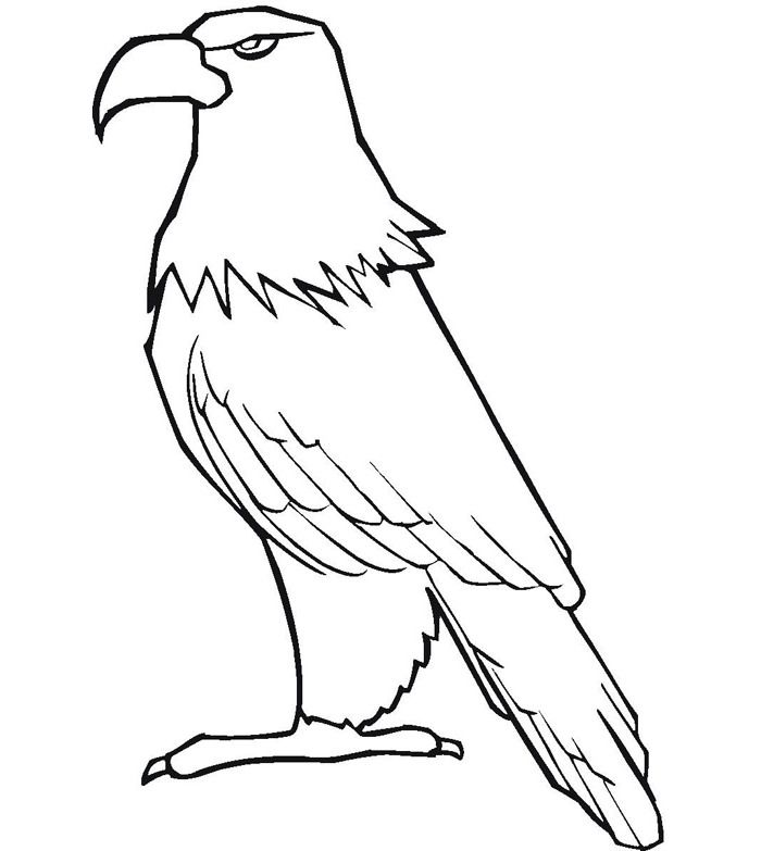 Baby Eagle Drawing Super Coloring Pages Animal Templates Coloring Pages