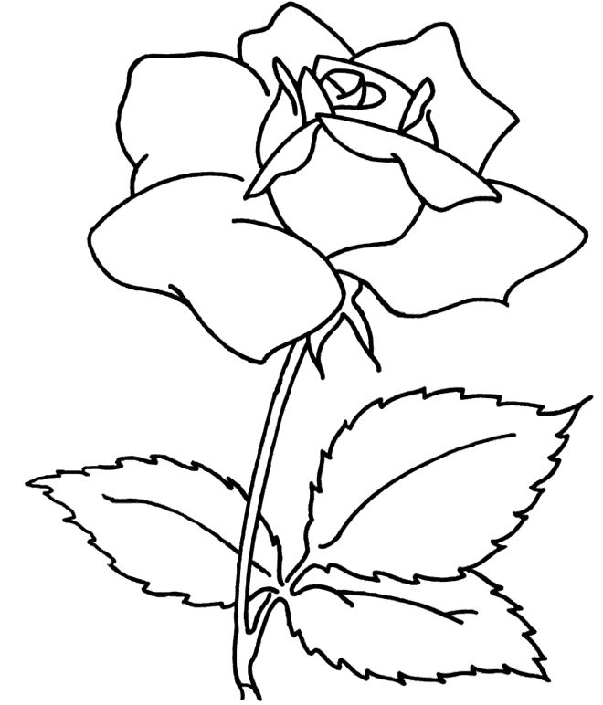 flowers coloring pages   spray flower coloring sheets for