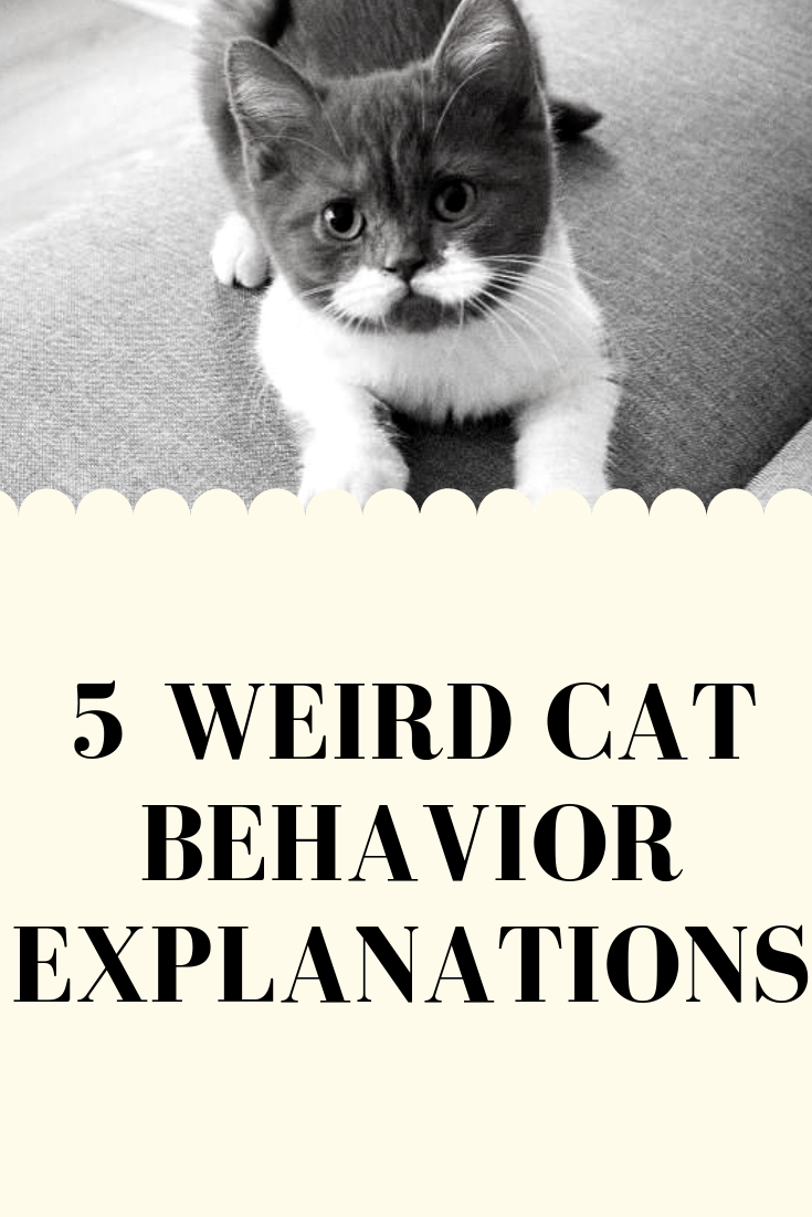 Cats Cat Catsofinstagram Catstagram Instacat Catlover Meow Instagood Lovecats Catoftheday Cute Pet Cats Of Instagram Crazy Cats Cat Behavior Cats