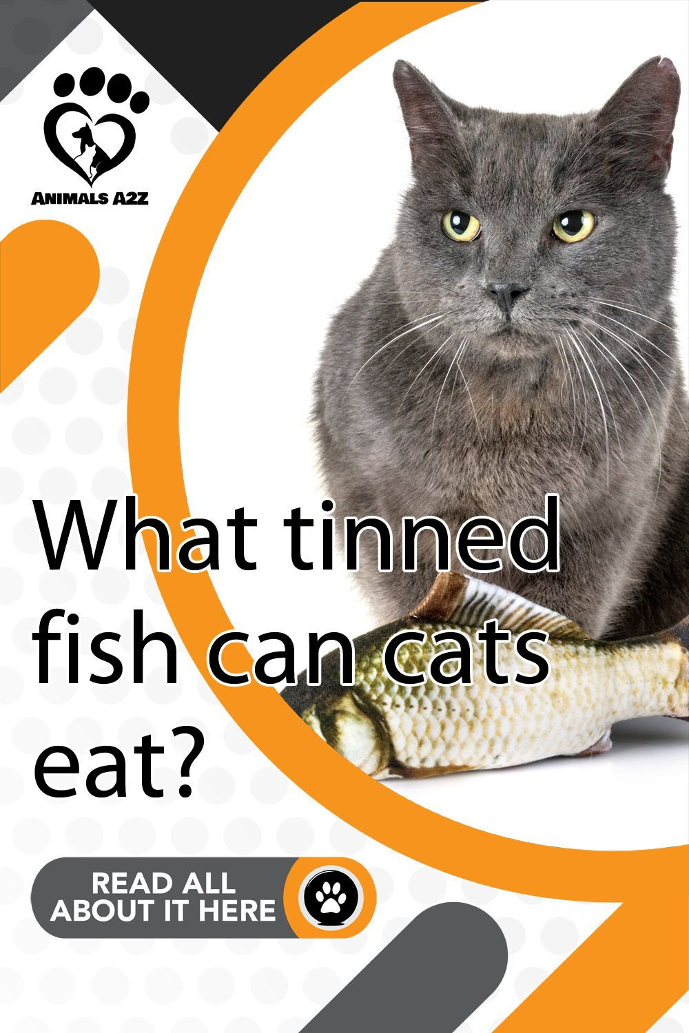 Pin on Food & Treats for Pets