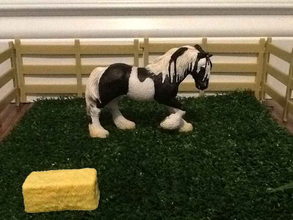 This is the 2004 Tinker mare.