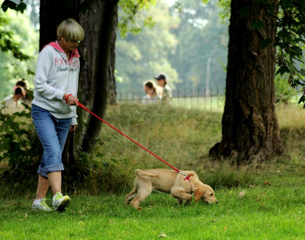My Dog Doesn T Like Other Dogs 5 Steps To Stop The Barking And