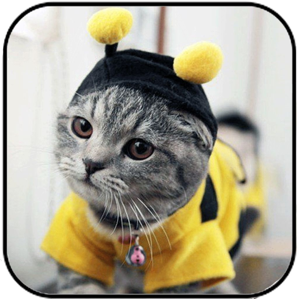 bee clothing for your cat | bees | pinterest | cats, cute cats and pets