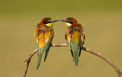 fine-feathers:    abejaruco europeo o abejaruco común (Merops apiaster) by daniwilliamwallace on Flickr.