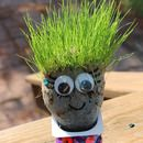 Haircut Chia Pet Grass Heads! Great for Summer Break!