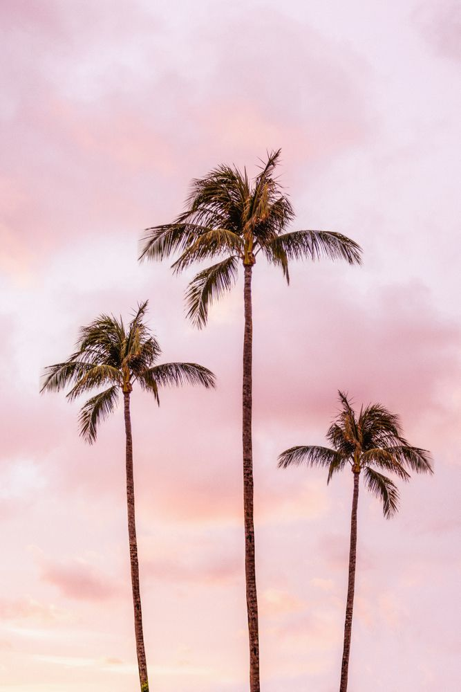 Palm Tree Photography | Landscape | Sunset Unicorn Clouds | Blush Millennial Pink Acrylic Box by wildhood