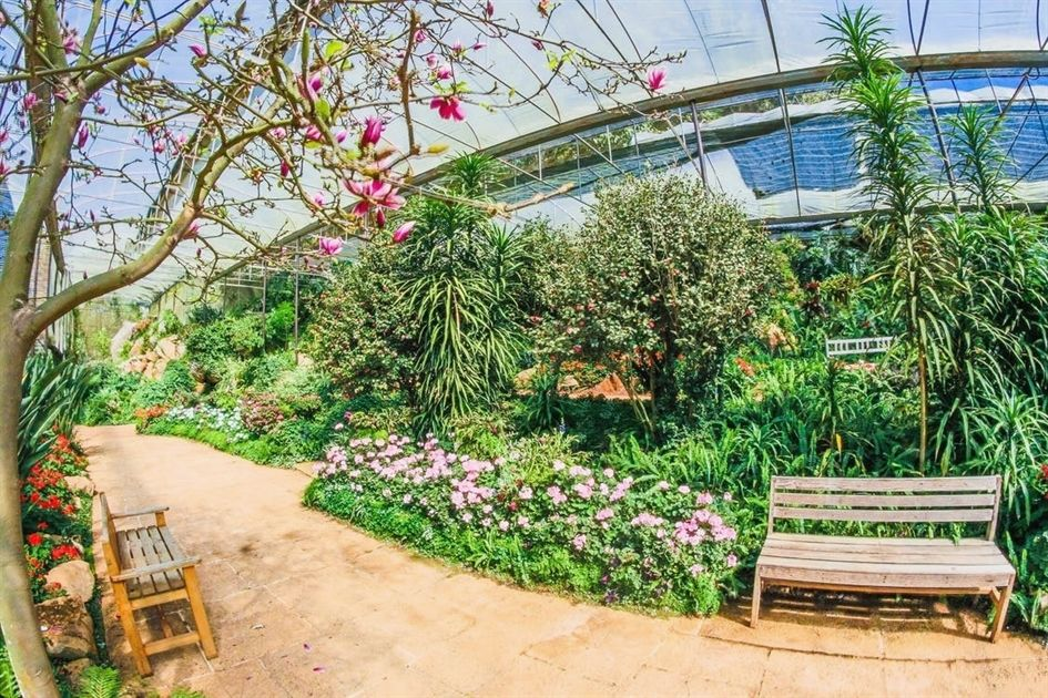 Advice That Will Prove Helpul When Horticulture With Images