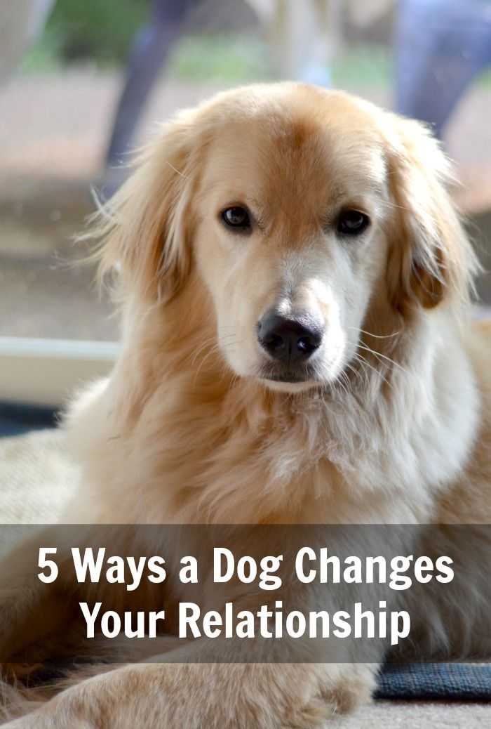 5 Ways A Dog Changes Your Relationship Yup 3 Dogs