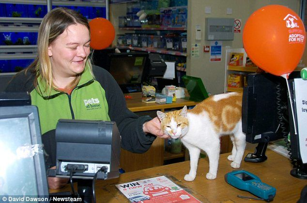 Video Graham The Cat Visits Pets At Home Store Every Day Paying Particular Attention To The Mice And Fish For Sale Pets Animal House At Home Store
