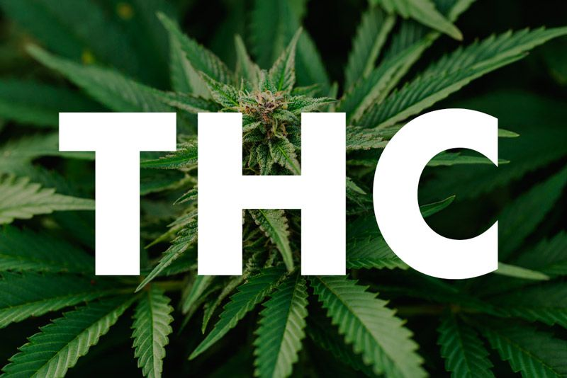 ¿Conoces los efectos adversos del THC?