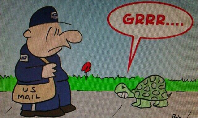 Guard turtle... :)