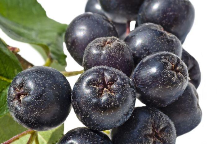 Awesome Aronia Rezepte Saft Apfelbeeren Gesund Frucht Saft Zugvogel