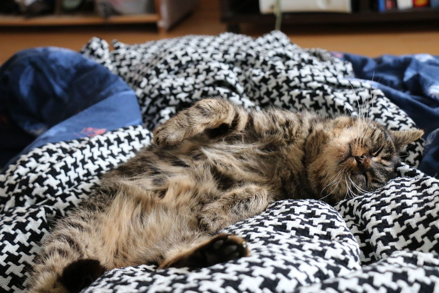 That belly fur is my demise   http://ift.tt/1RejMPx via /r/cats http://ift.tt/1RFKhh9  cats funny pictures