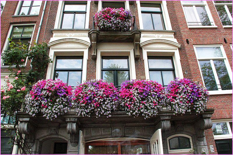 "fotofreddy: ""Balcony with flower orgy """