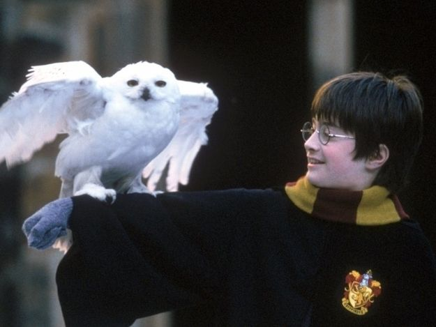Hedwig Was Played By Three Male Owls In The Movies Harry Potter Hedwig Harry Potter Owl Harry Potter Facts
