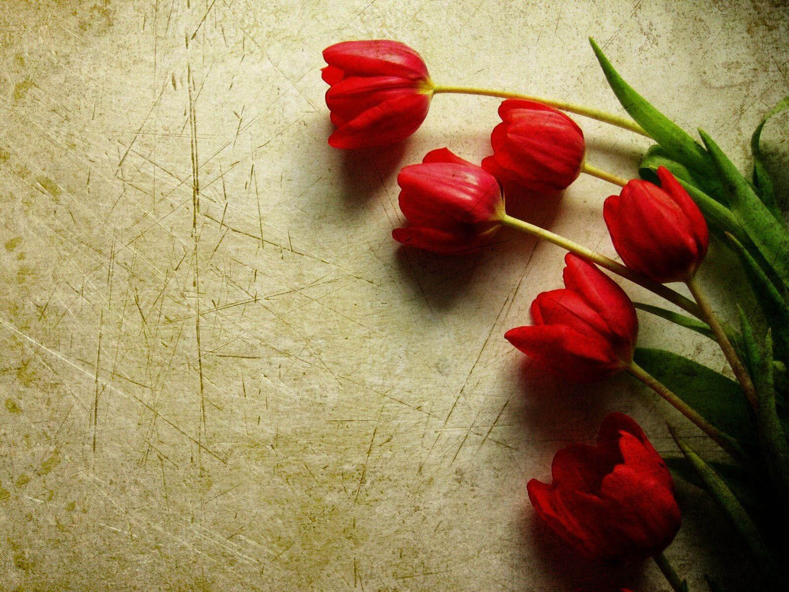 High quality tulips wallpapers download wallpaper pinterest hd high quality tulips wallpapers download wallpaper pinterest thecheapjerseys Image collections