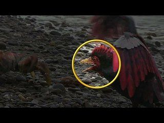 Walking with Dinosaurs: The Movie: Dino Files: Big Mouthed Alexornis --  -- http://wtch.it/UwcEY