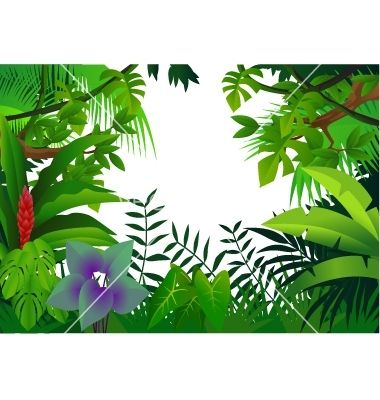 Tropical Rainforest Animals Drawing | Tropical rain forest vector