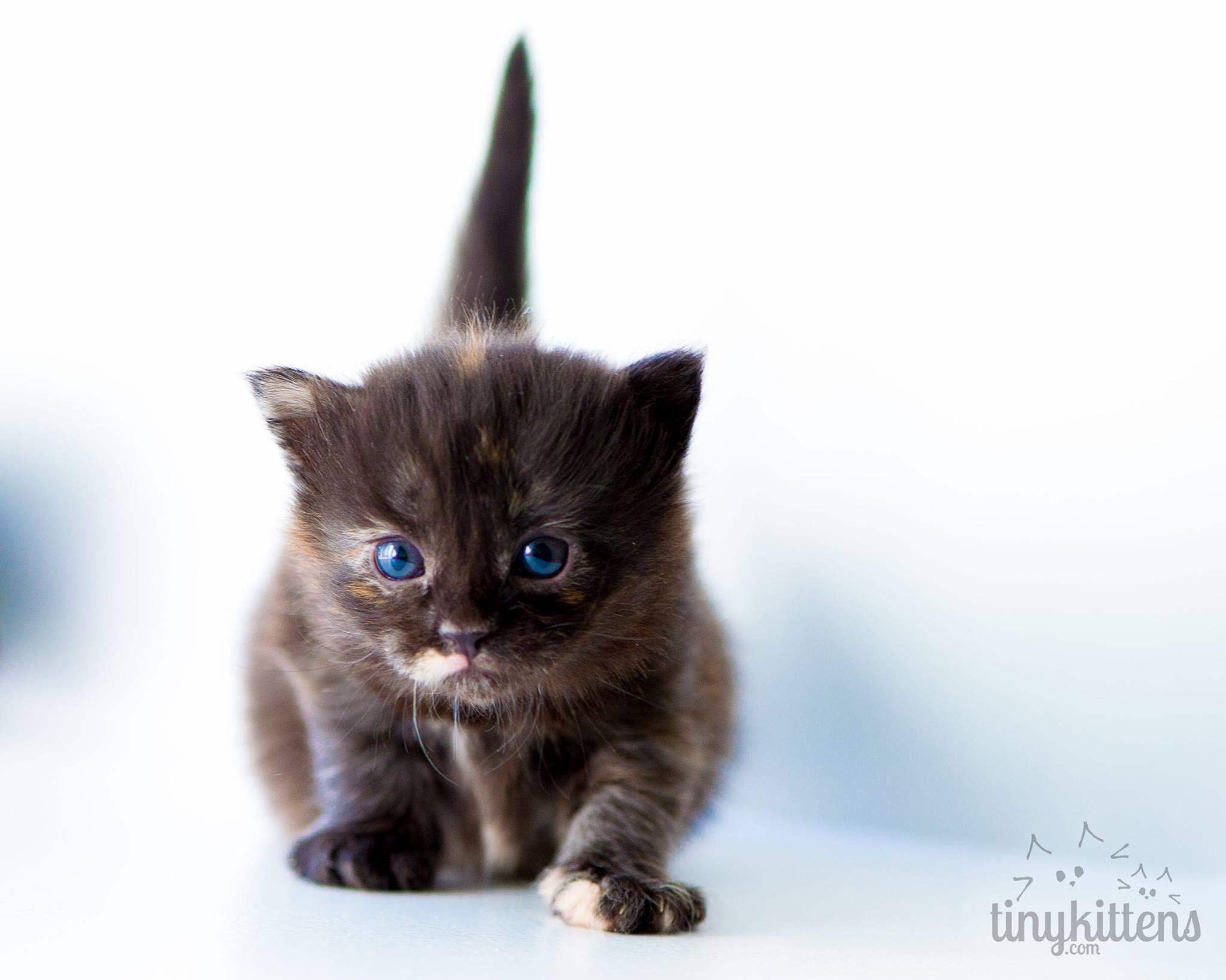 Kleine Katze Cute Cats Crazy Cats Kittens