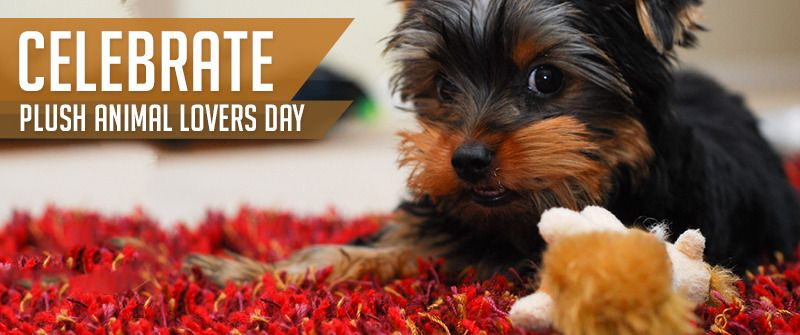 How are you celebrating Plush Animal Lovers Day? https://www.sitstay.com/blogs/good-dog-blog/celebrate-plush-animal-lovers-day-with-a-new-plush-toy-for-fido?utm_campaign=coschedule&utm_source=pinterest&utm_medium=SitStay%20Dogs&utm_content=Celebrate%20Plush%20Animal%20Lovers%20Day%20with%20a%20new%20plush%20toy%20for%20Fido%21