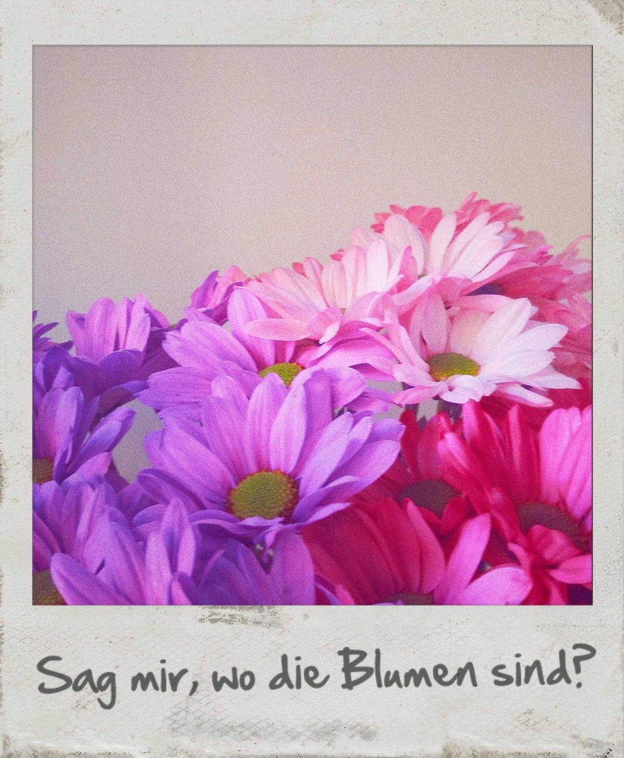 Flowers Song Quote Pink Vintage Polaroid Love Edelwei