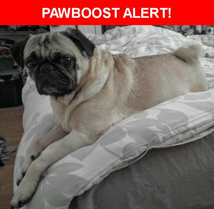 Please spread the word! Mya was last seen in Indio, CA 92201.    Nearest Address: Near Chiriaco Rd & Summit Rd