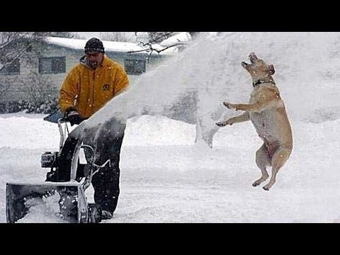 Funny Dogs And Cats Playing In The Snow Funny Animal