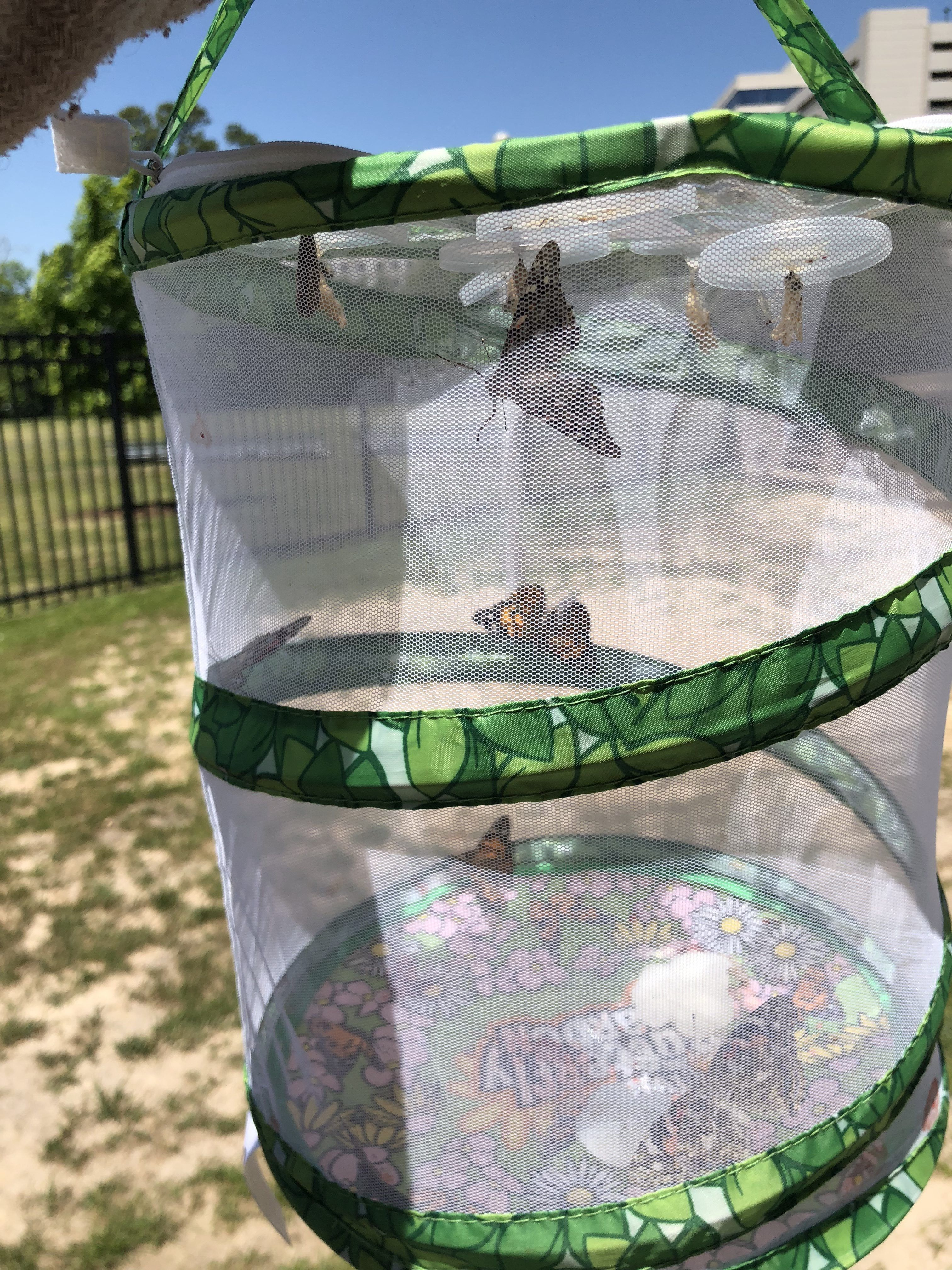 Life Cycle Activities For Kids Plants And Animals In