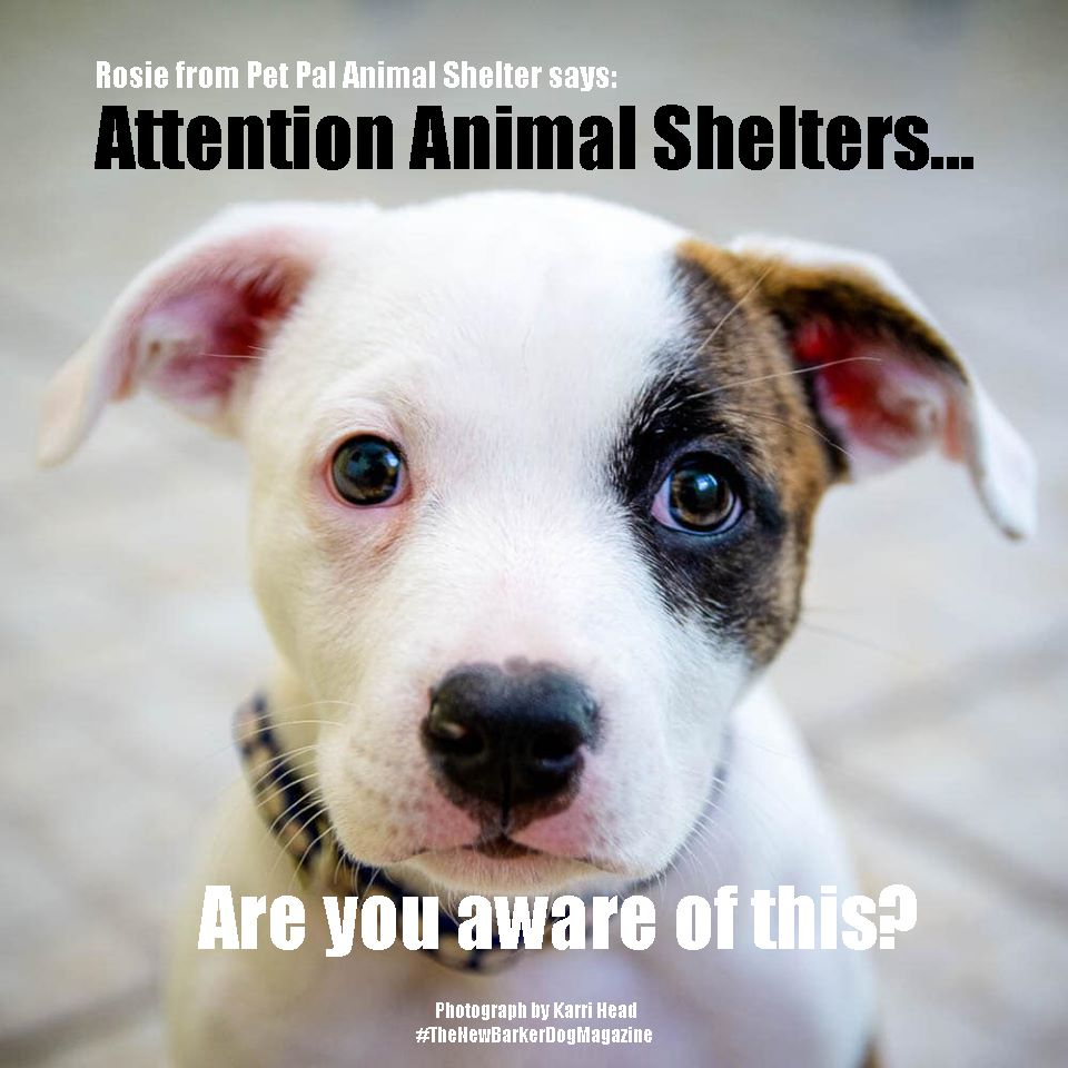 Pin On Adoptable Dogs