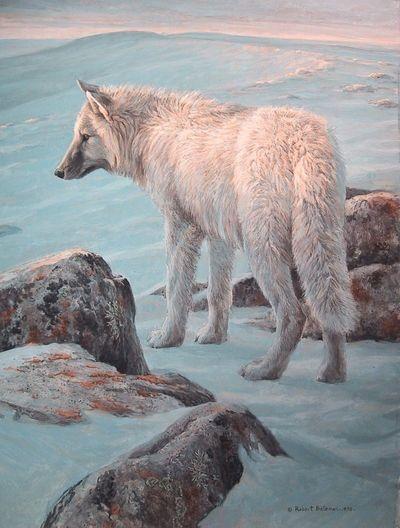 ☆ White Wolf ゝ。By Artist Robert Bateman ☆