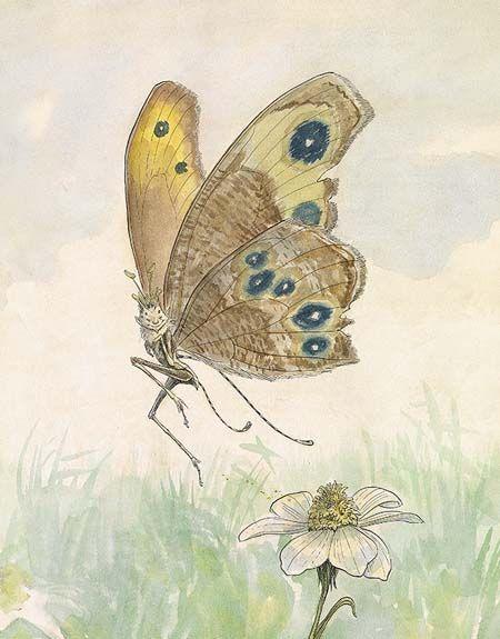 Farfalla curiosa