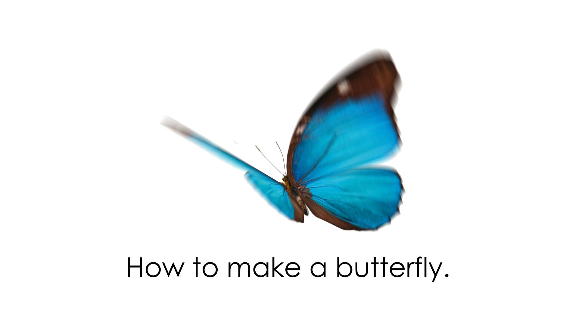 AfterEffectsで作る蝶 how to make an animate butterfly by
