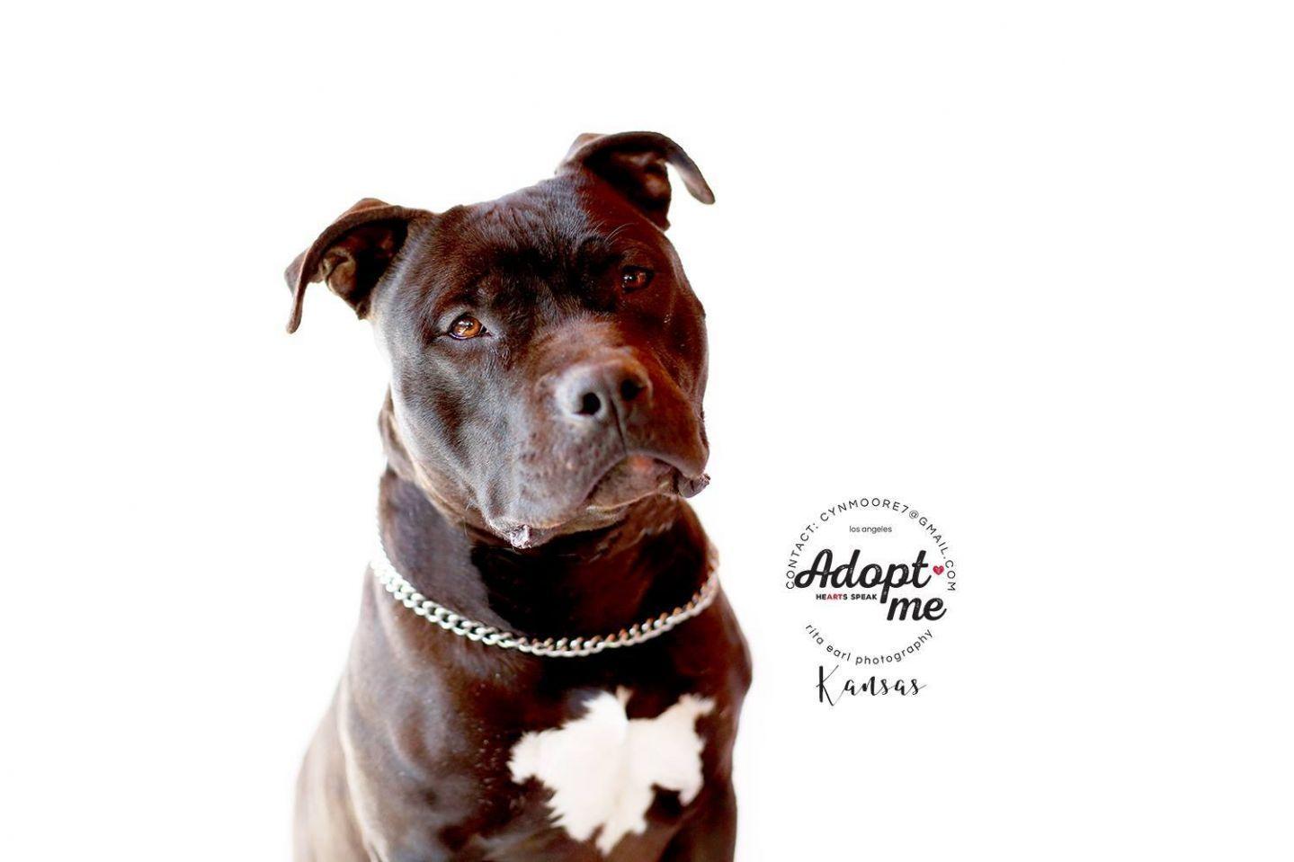 Adopt Kansas *Courtesy Listing on Petfinder American