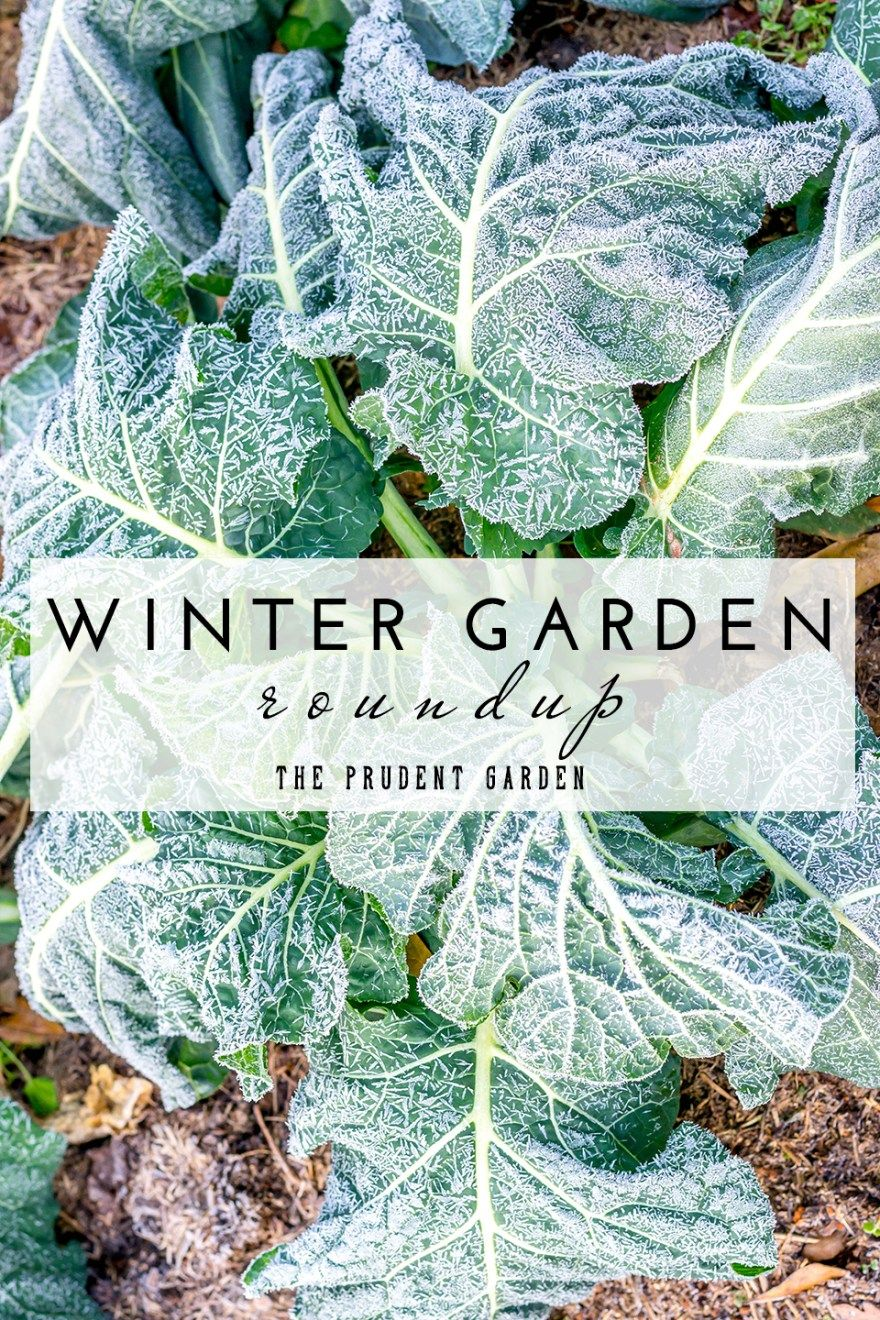 winter garden roundup articles on cold weather prep mulching