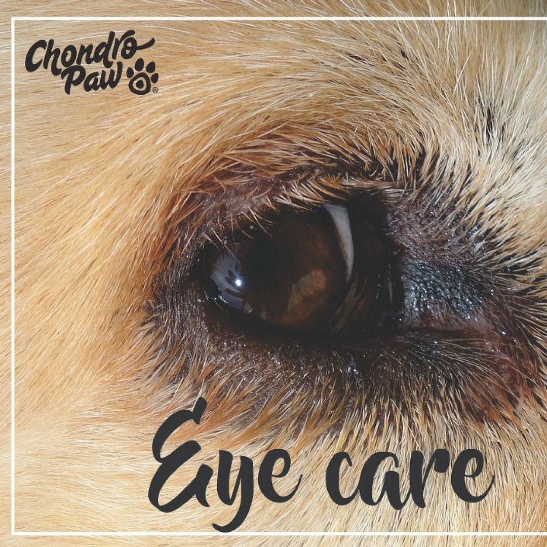 Check Your Dog S Eyes Regularly By Ranking Him Her To A Bright