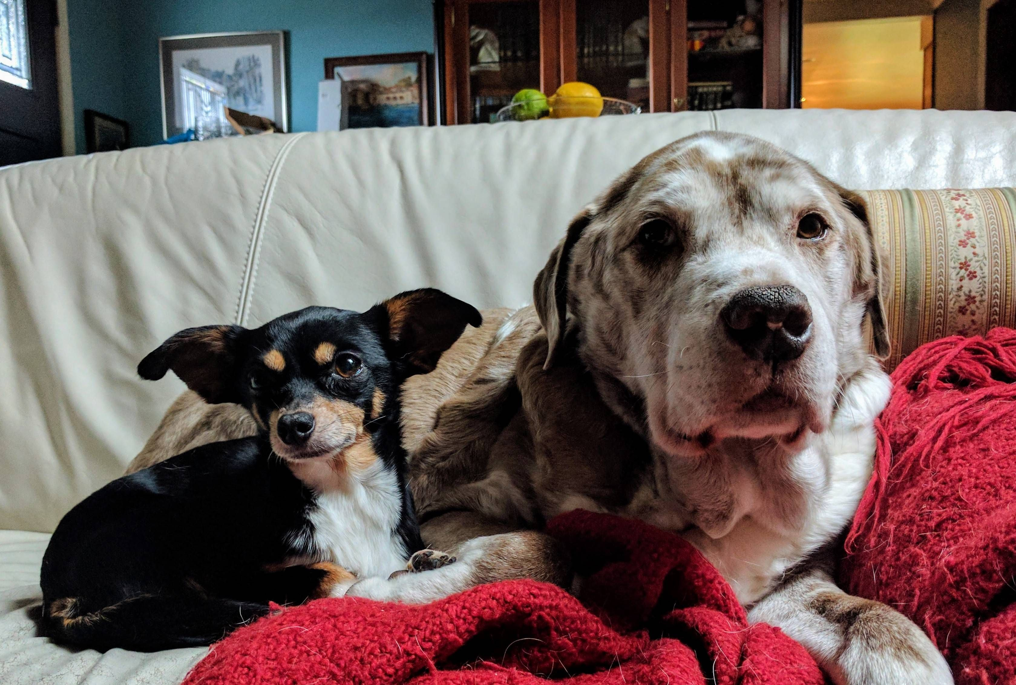 the odd couple together 11 years http://ift.tt/2mXFYWY