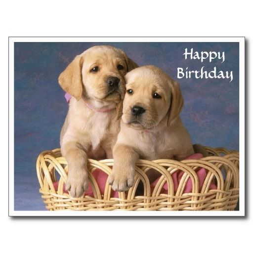 Happy Birthday Labrador Retriever Puppy Post Card Zazzle Co Uk