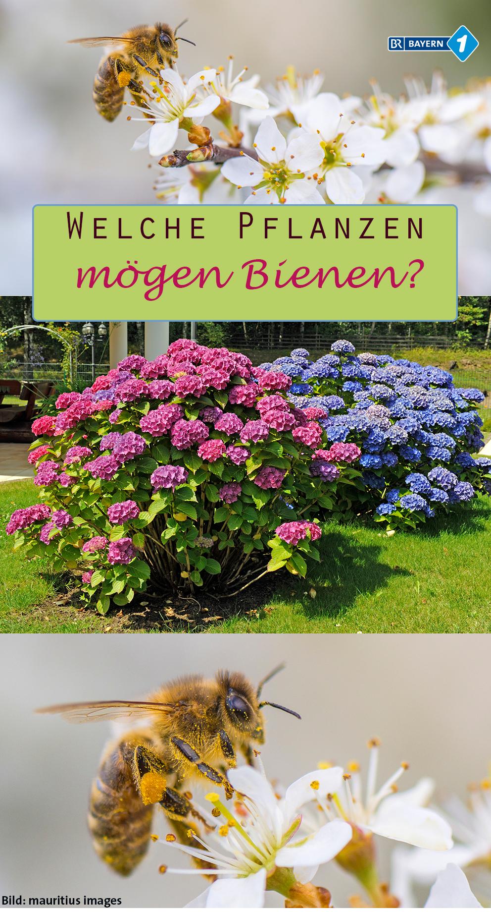 Welche Pflanzen Mogen Bienen Wir Legen Eine Bienenweide An Denn Bienenfreundliche Pflanzen Wie Kirsche Und Co Lo Bee Friendly Plants Garden Care Plant Care