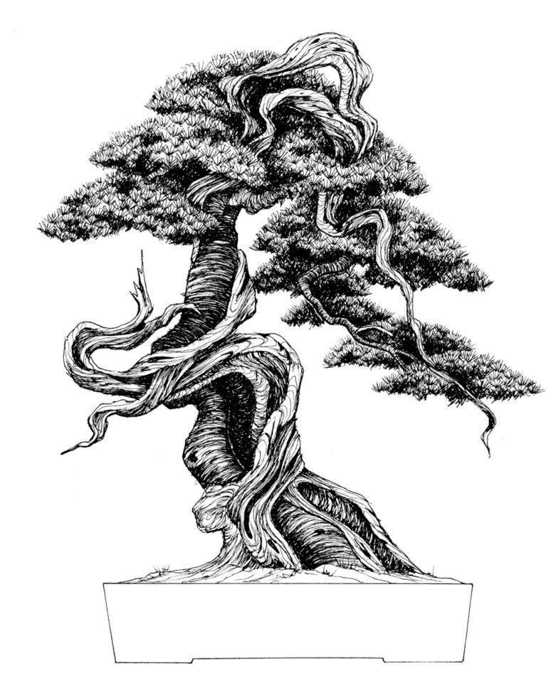 75025 308378869279163 1527633266 N Jpg 774 960 Bonsai Tree Tattoos Bonsai Tree Bonsai Tree Painting