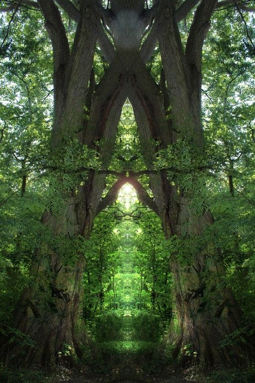 Breeze Forest Portal Portals To Another World Elven Ruins