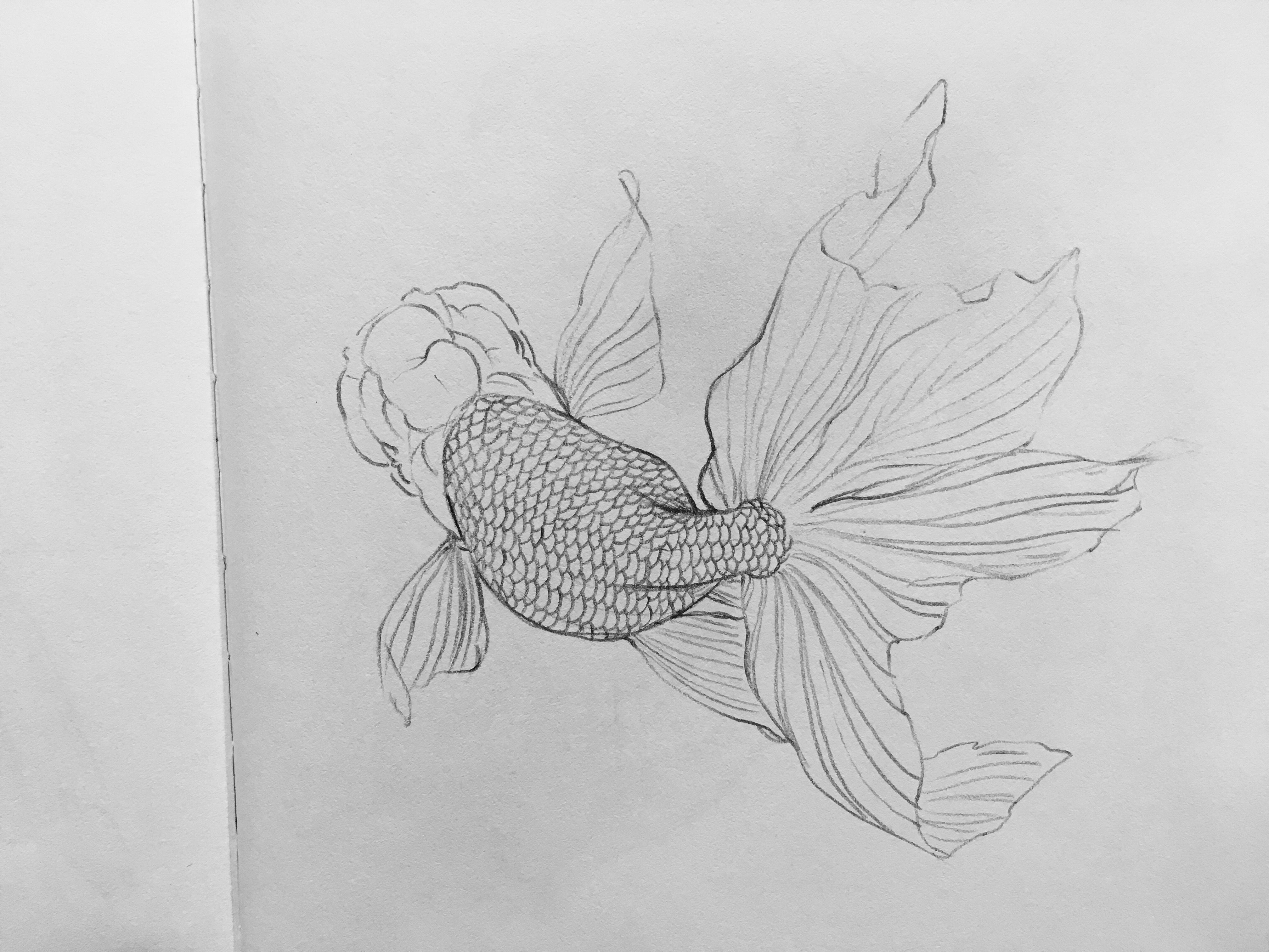 Uncategorized Goldfish Drawings pin by on gold fish pinterest goldfish and drawings charcoal art cork boards sketchbook ideas colored pencils bullet j