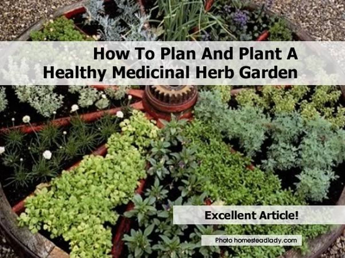 Trendy Medicinal Herb Garden Excellent Ideas Good Medicinal Herbs .